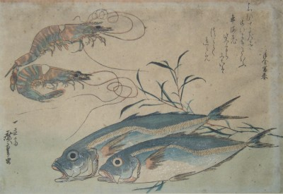 Two Fish and Two Crayfish