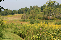estate_walk_meadow diane tucker